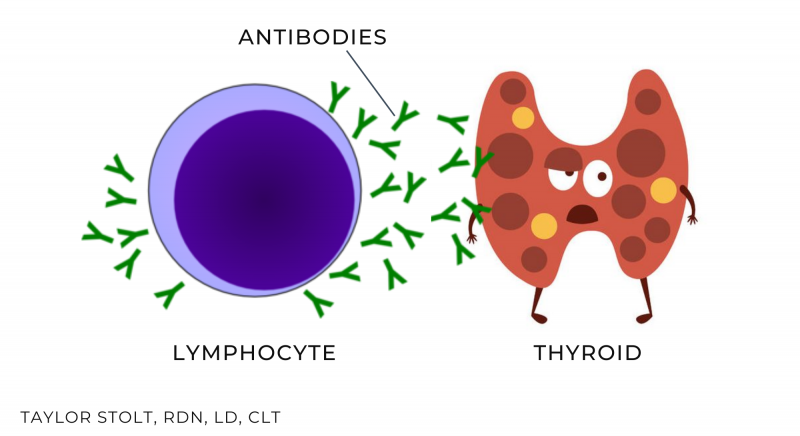 hashimotos low thyroid function hypothyroid